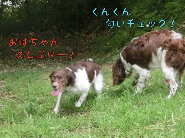 CIMG4275_201507201343044aa.jpg