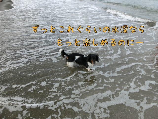 CIMG4388_20150722120657ae9.jpg