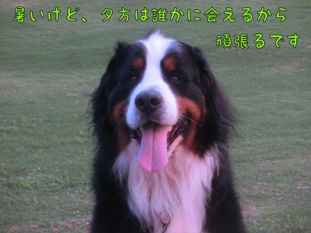 CIMG4812.jpg