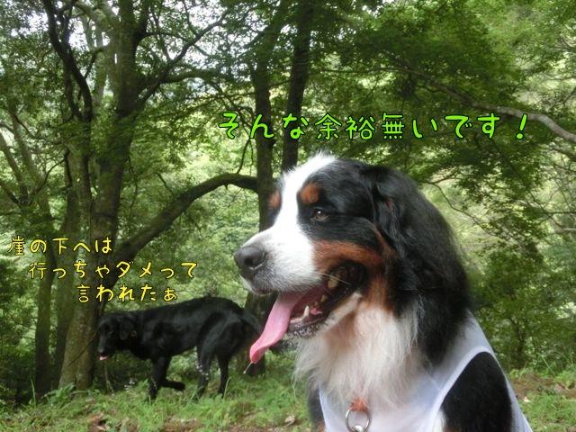 CIMG4857.jpg