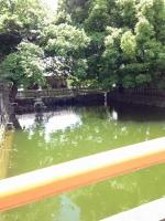 東寺の龍神池と鯉