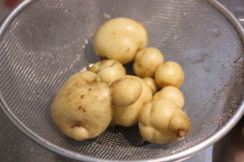 ジャガイモ栽培