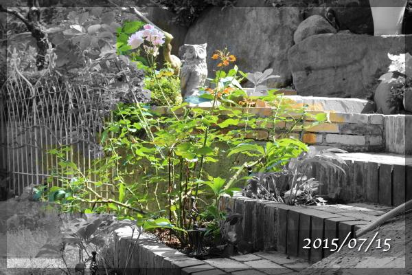 サンセットグロウ 20150715