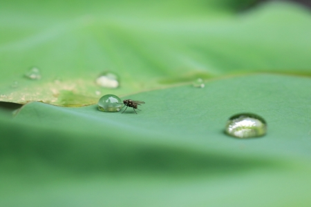 ハエと水滴。_10