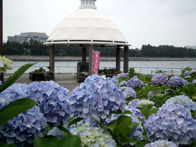 2015年 八景島シーパラダイスの紫陽花(4)