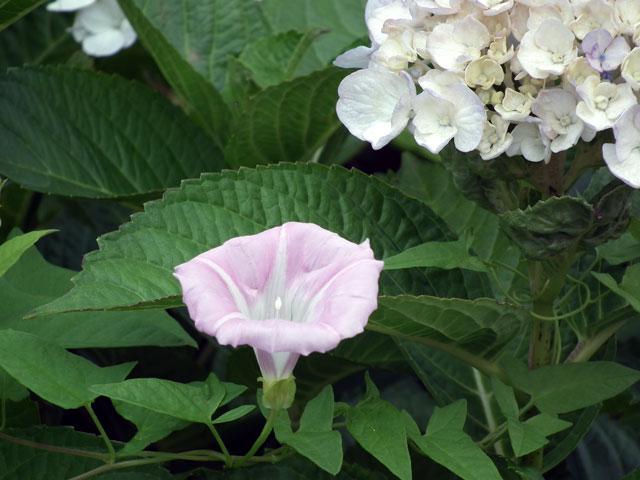 2015年 八景島シーパラダイスの不思議な花