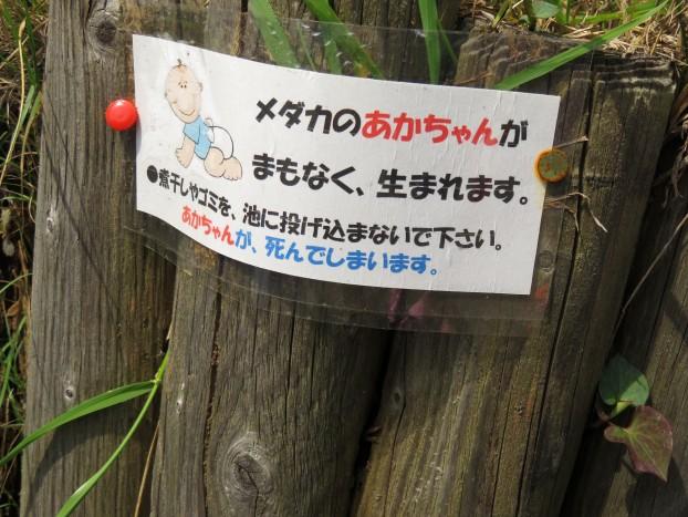 びぃなむ500-08