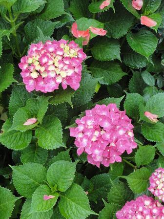 近所の花々②