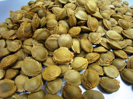 201506abricot-seeds.jpg