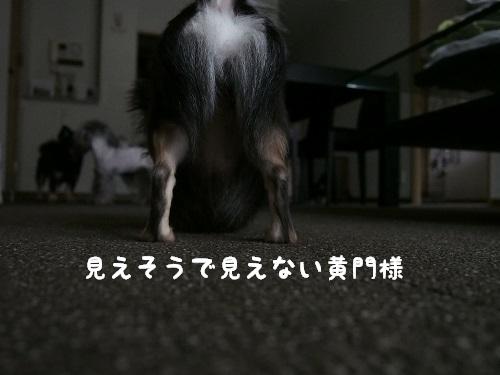 P6190025.jpg