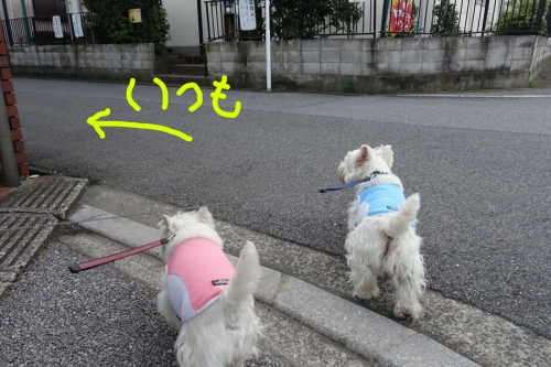 jyujyundagakoujyousintobosi1.jpg