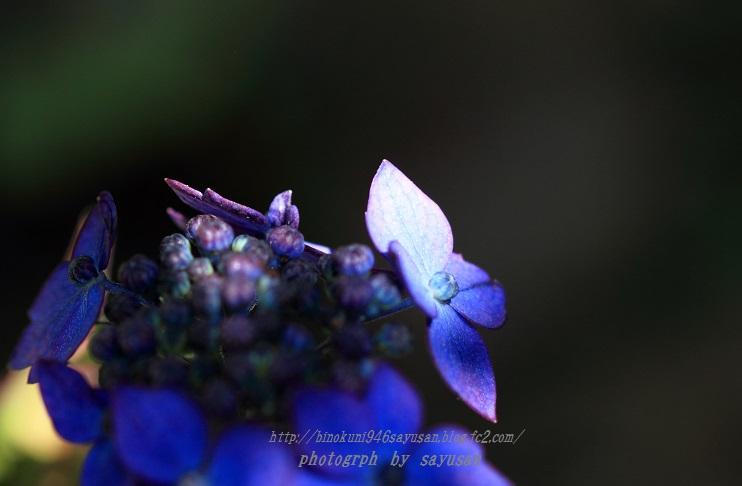 IMG_3795-A-02.jpg