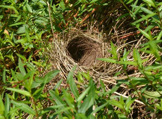 nest_20150718_DSC_8462.jpg