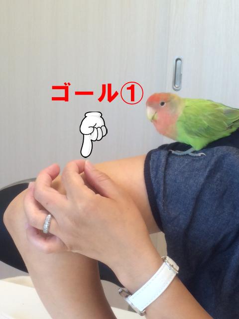ぼたんちゃん20150715-2