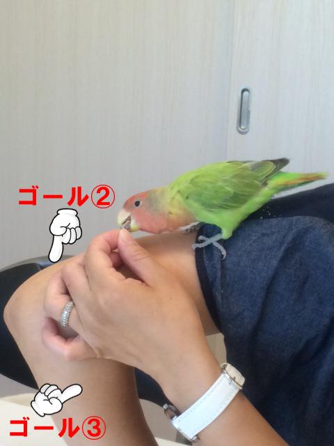 ぼたんちゃん20150715-3