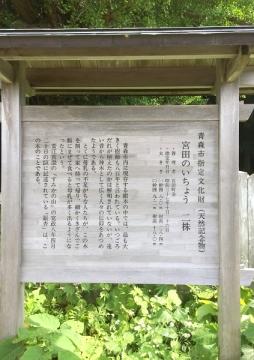 宮田の銀杏北 (2)_600