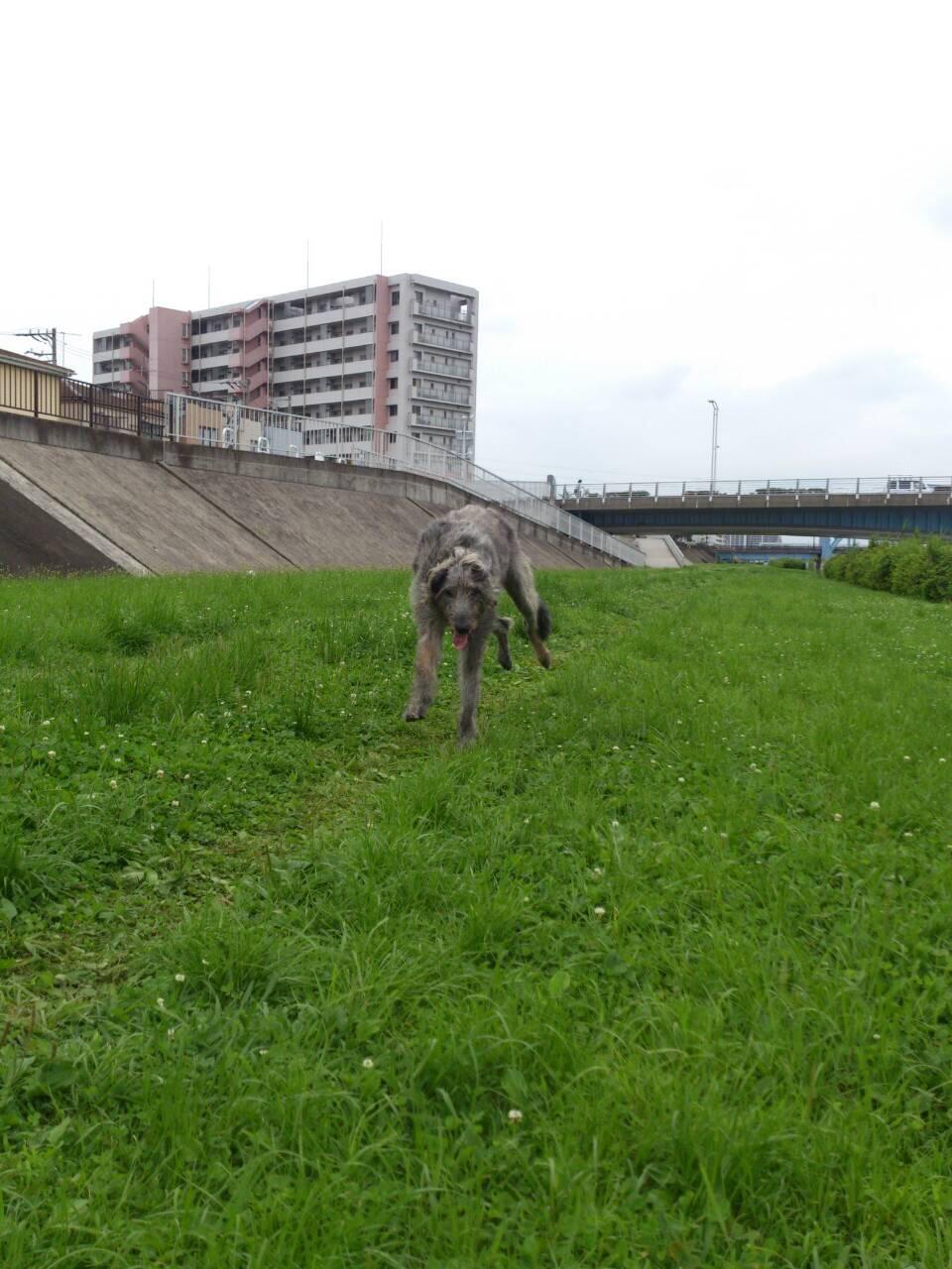 写真 4 (3)