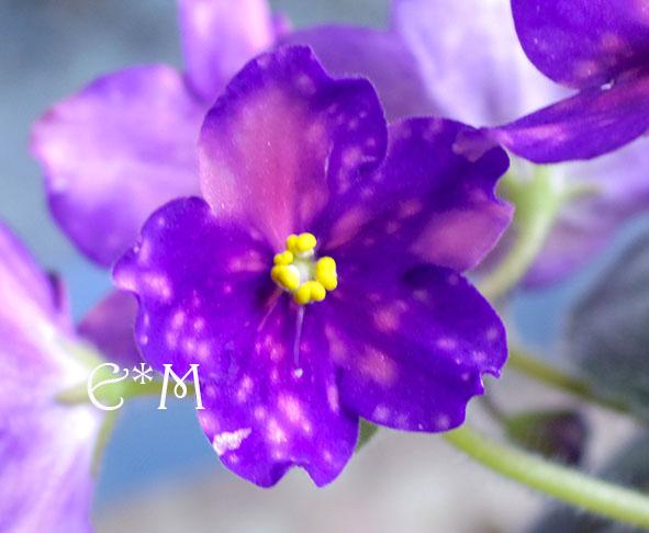 IMGP4611.jpg