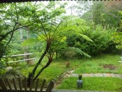 藍染茶房 藍風  緑の庭
