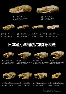 CMYK_表面_骨吉クリアファイル