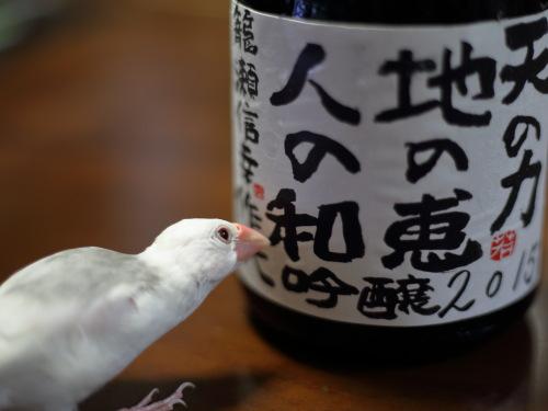kamera kowakunai osake chu- (3)