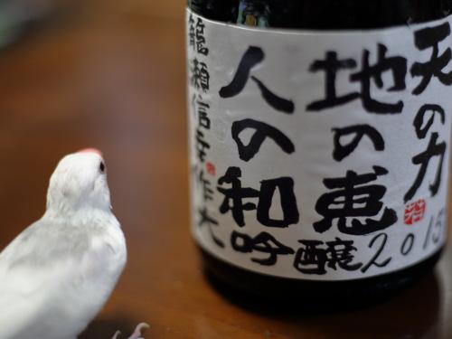 kamera kowakunai osake chu- (2)