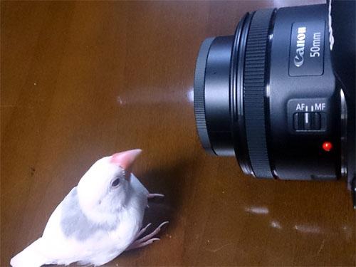 kamera kowakunai osake chu- (1)