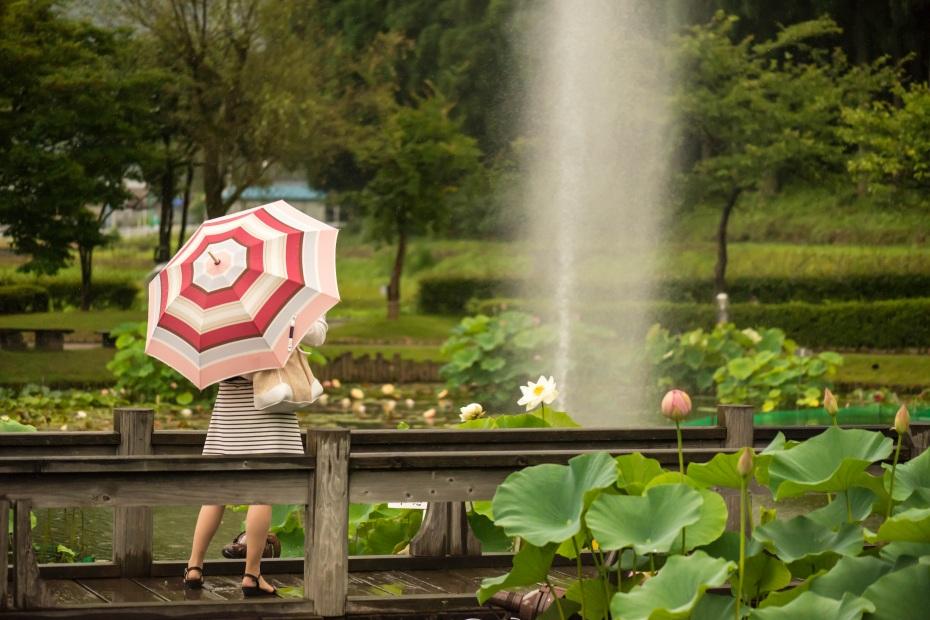 2015.07.07南条の花ハス11