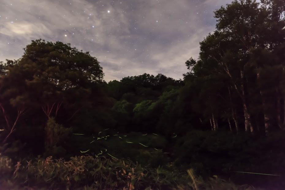 2015.07.13星空と蛍の舞い2