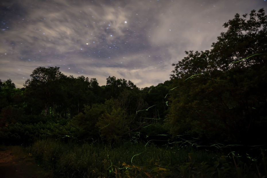 2015.07.13星空と蛍の舞い1