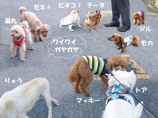 散歩仲間9匹全員集合