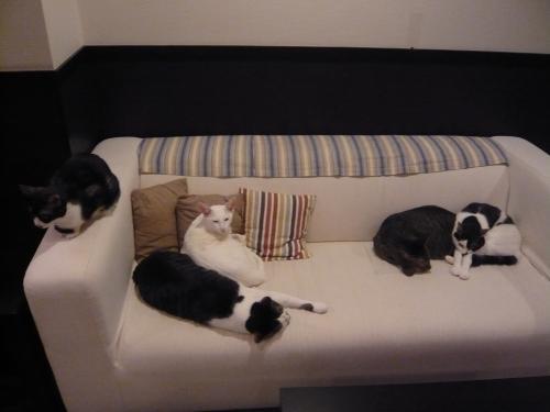 猫スタッフ全員