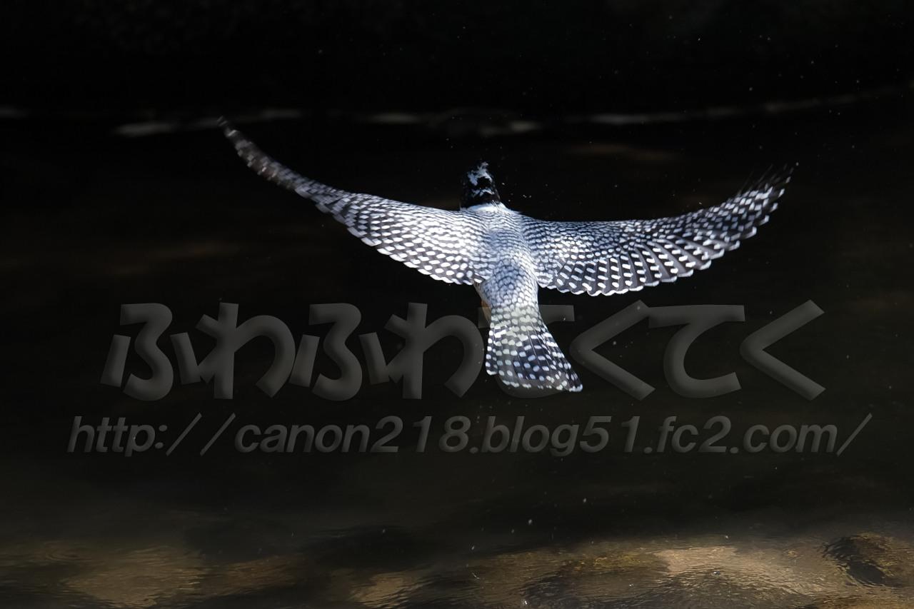 1DX_4336LR_1506.jpg