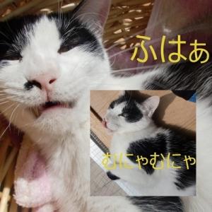 20150629なおちゃん