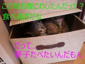 20150701CIMG5907.jpg