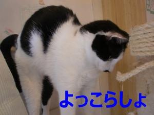 CIMG5922.jpg