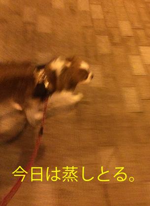 20150725-5 MG_8354