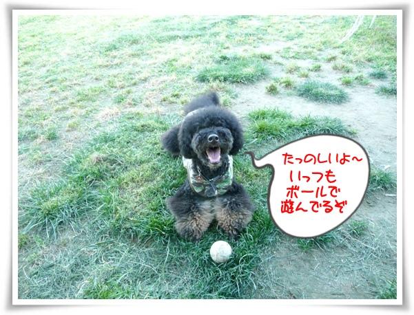 P1100989_1.jpg