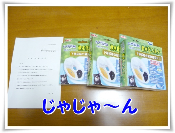P1110033_1.jpg