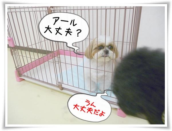 P1110480_1.jpg