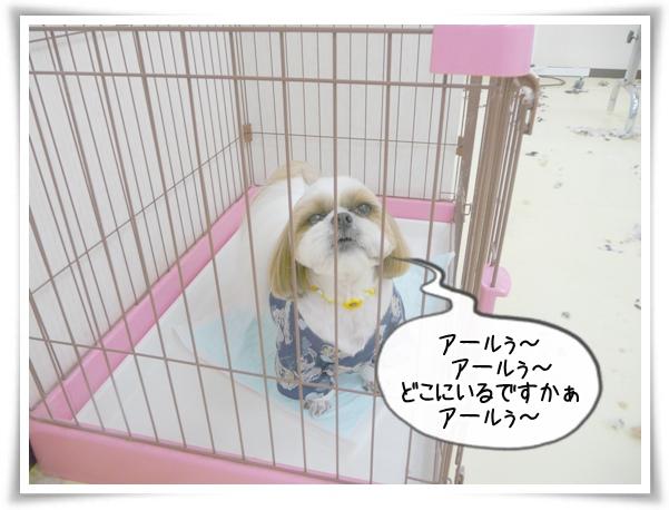 P1110516_1.jpg