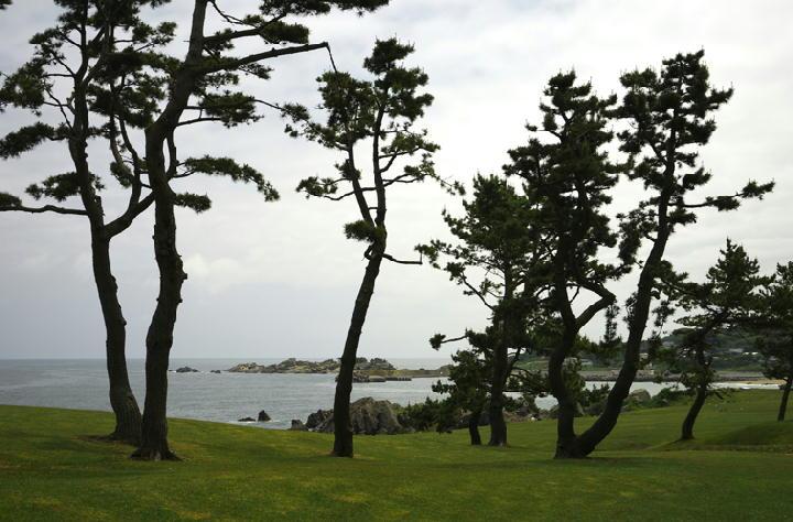種差海岸-272