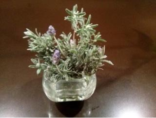 lavenderprune.jpg