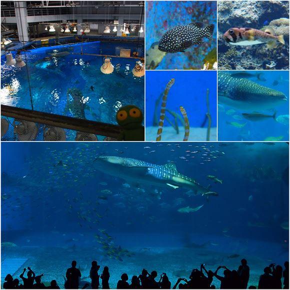 ゆうブログケロブログ沖縄2015 (104)_R