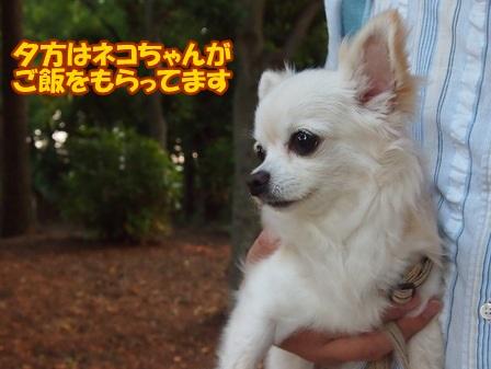 blog6411a.jpg