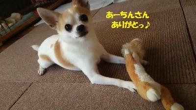 DSC_0236_convert_20150728094141.jpg
