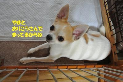 DSC_2874_convert_20150717132552.jpg