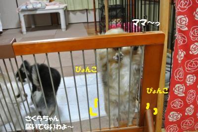DSC_2882_convert_20150722115109.jpg