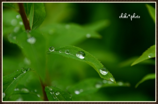 photo-672 雨粒