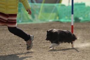 okayamao 275111_R